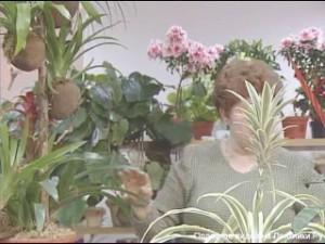 Комнатные растения. Покупка. Рассадка. Уход