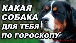 Гороскоп по породам собак