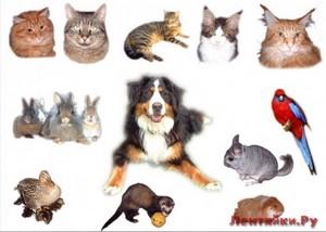 Какое домашнее животное подходит вам по знаку Зодиака