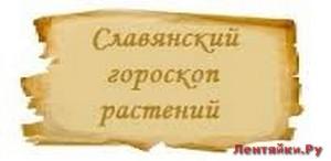 Славянский гороскоп растений