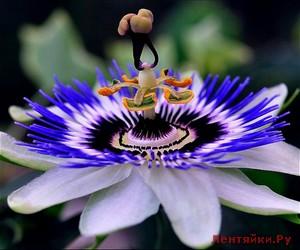 Какой цветок соответствует вашему имени