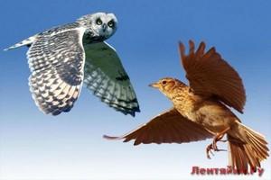 Из совы в жаворонка: как утренние тренировки меняют жизнь