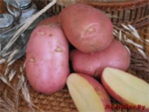 Красный картофель для похудения