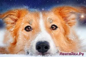 Гороскоп на 2018 год Что обещает Желтая Собака?