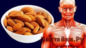 Что Случится, Если Съедать 20 Орехов Миндаля в День?
